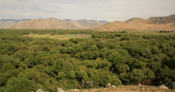 Photo overlooking Audubon Kern River Preserve from Migrant Corner � Alison Sheehey 2011